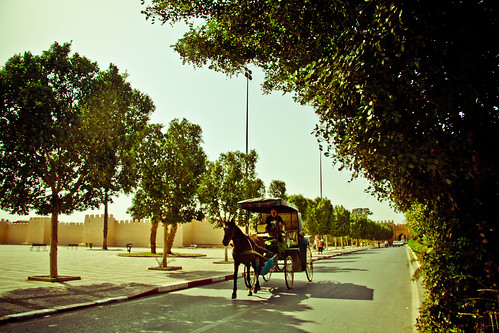 Horse & Carriage | by Umbreen Hafeez