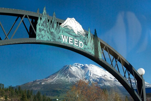 Welcome to Weed | by mblibby