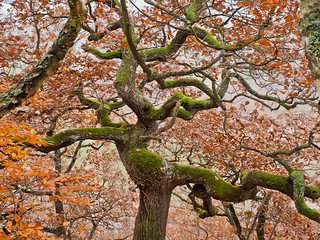 Dancing oak dryad - fall red | by www.martin-liebermann.de (zeitspuren)