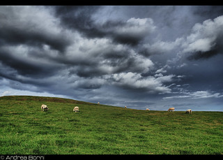 Pseudo Windows wallpaper (with sheeps) | by And979