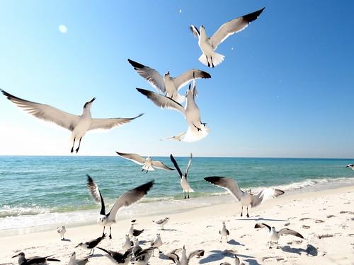 Seagrove Beach Fl Jobs