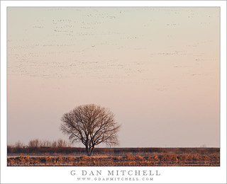 Tree and Bird-Filled Morning Sky | by G Dan Mitchell