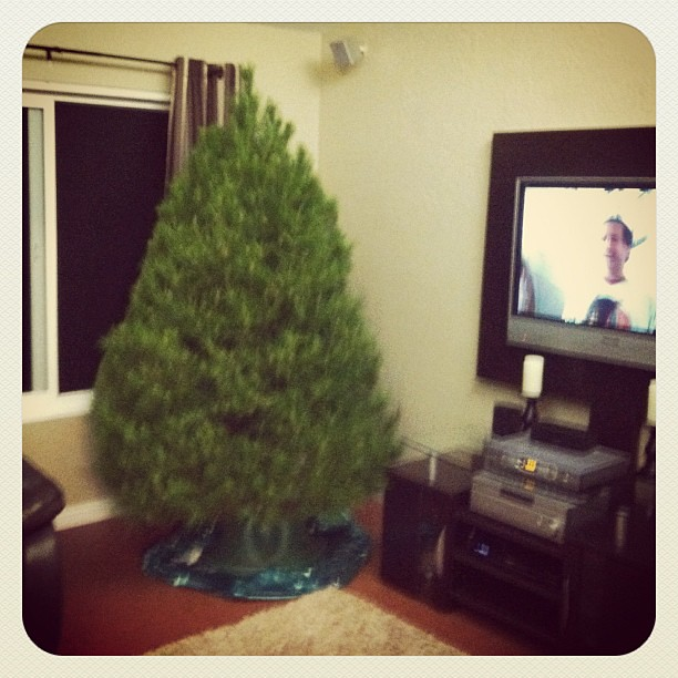 christmas tree in christmas vacation on tv its official holidays have started - Christmas Vacation On Tv