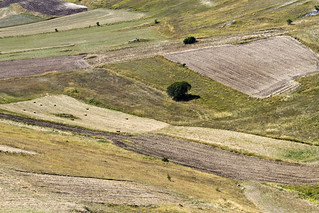 Castelluccio Fields #20 | by storvandre
