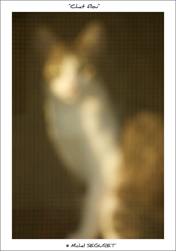 Chat flou / Blurry cat | by Michel Seguret Thanks for 11 M views !!!