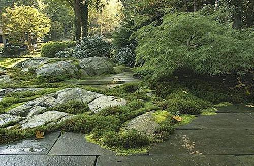 Rock garden design ideas by new york plantings rock for Free rock garden designs