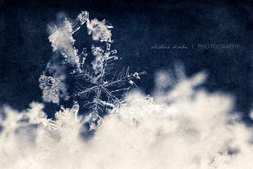 First Flake | by Araminta Studio