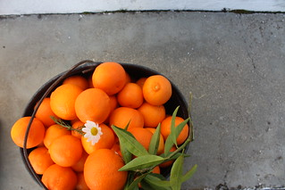 clementinas * tangerinas * tanjas * laranjas * marroquinas | by {TheWeightOfDreams}