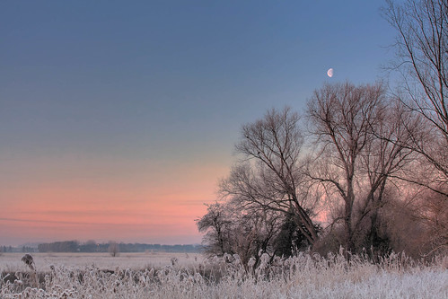 Moon setting over the trees (HDR) | by eFRAME.co.uk
