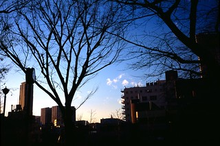Branches | by hiro_take