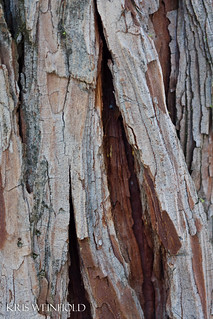 Bark | by guitar fish