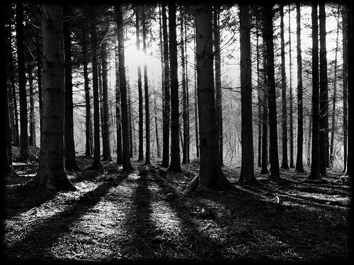 At the edge of the Dark Forest | by kenny barker