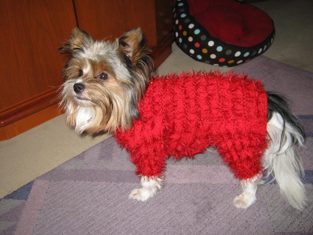 Hundemantel Mit Bauchschutz Rundumschutz Giela Flickr