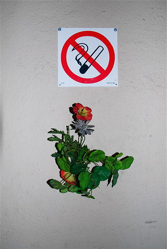 no flowering | by geirt.com