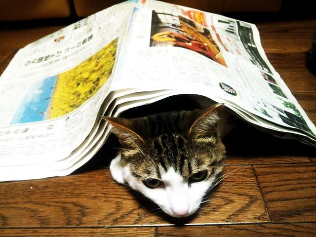 床暖+新聞紙