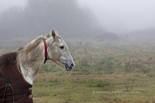 psm horse-mist4 | by paul s marshall photography