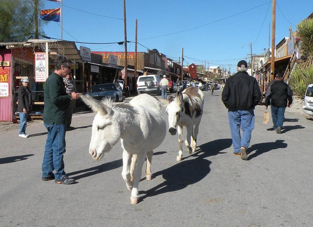 free range donkeys