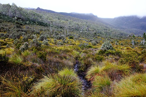 We stumble through and around the bogs near Lake Belcher | by Trains In Tasmania