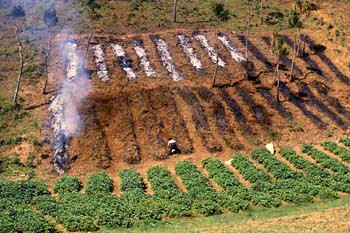 jhum cultivation Jhum or shifting cultivation is a primitive practice of cultivation in states of north eastern hill region of india and people involved in such cultivation are called.