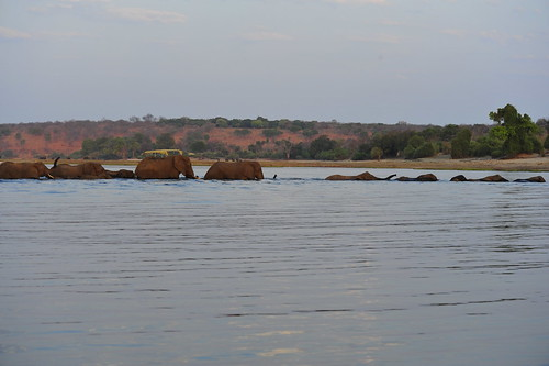 More elephants crossing | by DSLEWIS