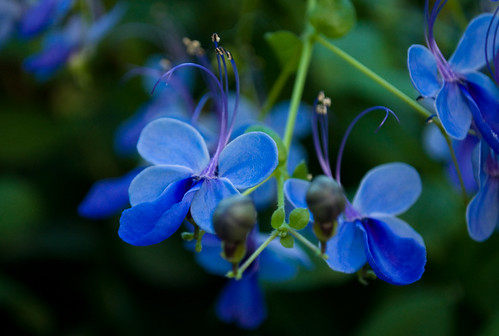 amazing blue | by irinywka
