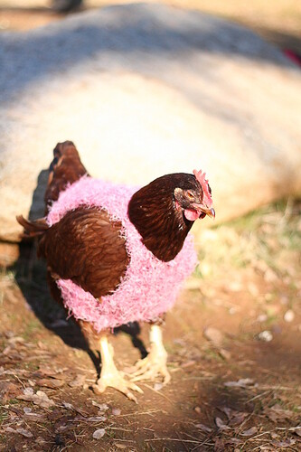 Big Red in a Chicken Sweater | by Marji Beach