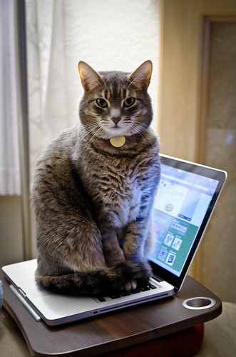 Cat-like typing | by jonasflanken
