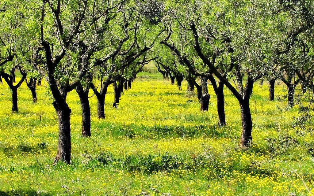 las flores del campo no quieren macetas | ¡salgan esta seman… | flickr