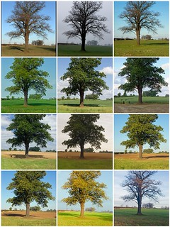 Tree 2011 | by stephenlamb