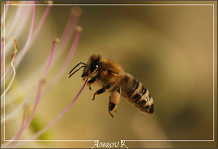 "Hard worker "" Explored "" 