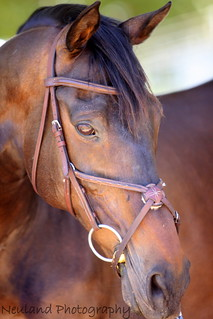 Equine Photography Course | by neulands