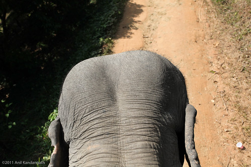 View from atop an elephant | by Zimbly Anil!