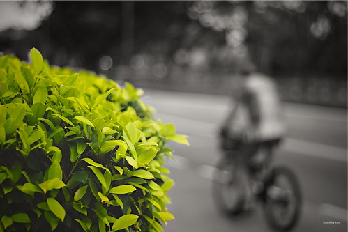 Go Green {explore} | by Irudayam