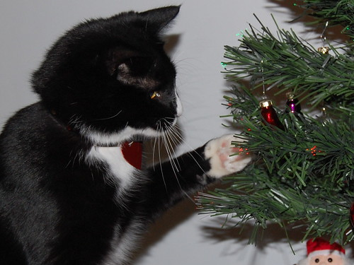 Sparky Playing with Ornaments | by MaryinClare