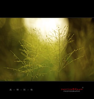 Life in the Light  2 | by 風傳影像 SUNRISE@DAWN photography