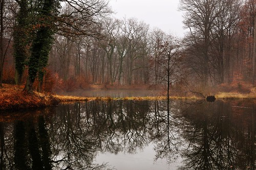 Wahner Heide / Altenrath | by michaeltimpe