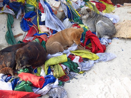 Dogs with Prayer Flags at Swayambhu | by fabulousfabs