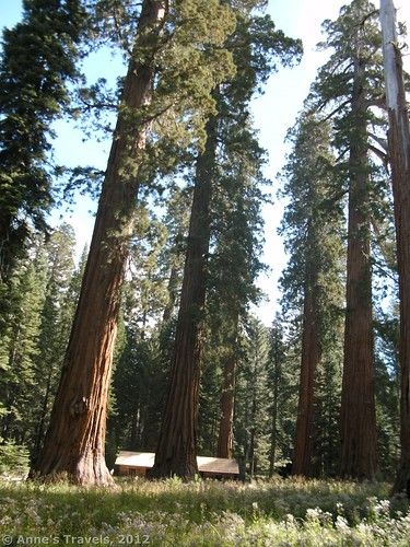 In the sequoias of Yosemite National Park, California