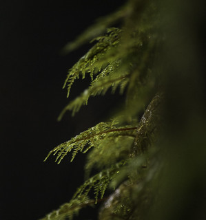 Moist Mountain Moss | by Tideline to Alpine