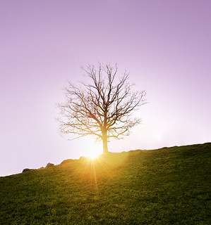 Lonely tree | by Sergei-P