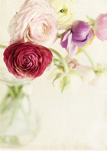 Ranunculus in a vase | by Angie {A J Woldman Photography}