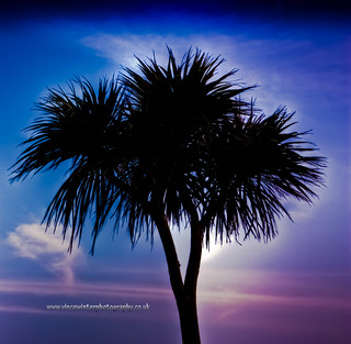 Palm Tree, The Leas Folkestone. | by ziggystardust111