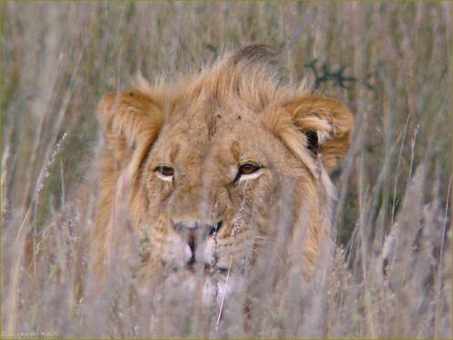 Who's watching whom.. | by LC's Eye (Wild Images of Africa)