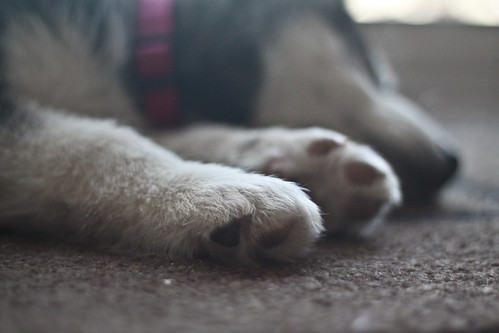 Tiny Paws | by jenniferkuhn