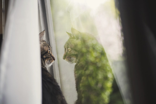 Tabby Bokeh | by whitneybee
