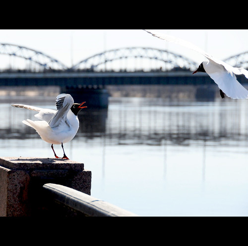 Greeting a friend by the Daugava River, Riga / Latvia | by ANJCI ALL OVER