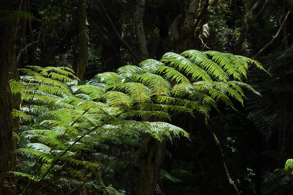 2009 Jan NZ Mangroves Park 033