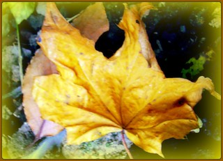 Luv Me or Leaf Me | by pinklady6... Home ..