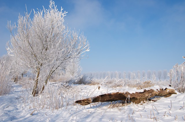 Winter landscape LSVK7934