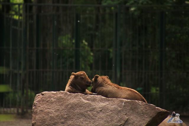 Tierpark Berlin 29.05.2016   0104